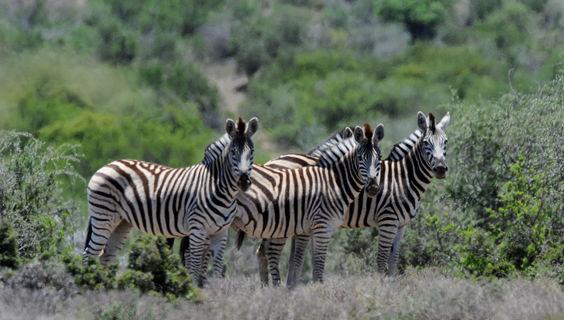 © www.southafrica.net